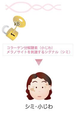 NF-kB