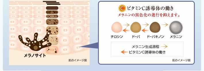 美白成分ビタミンC誘導体